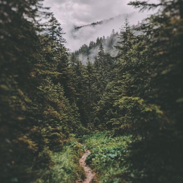 WaldbadenDOKjzLWjppjjZ